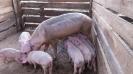 Die Biogasanlage_2
