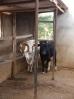 Die Biogasanlage_3